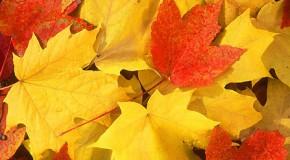 10_10_15_fall-leaves2