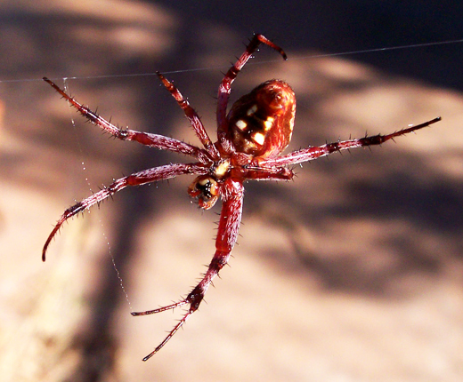 The tale of the dancing spider and the incredible vibrating dog