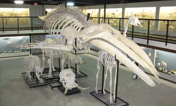 No bones about it: Osteology museum provides a fun afternoon