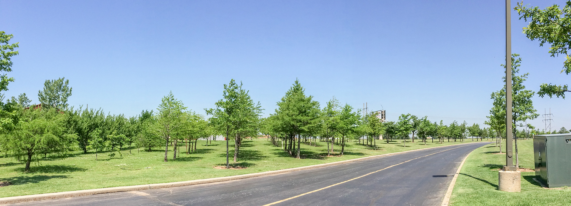 Tree farm leaves campus in the green