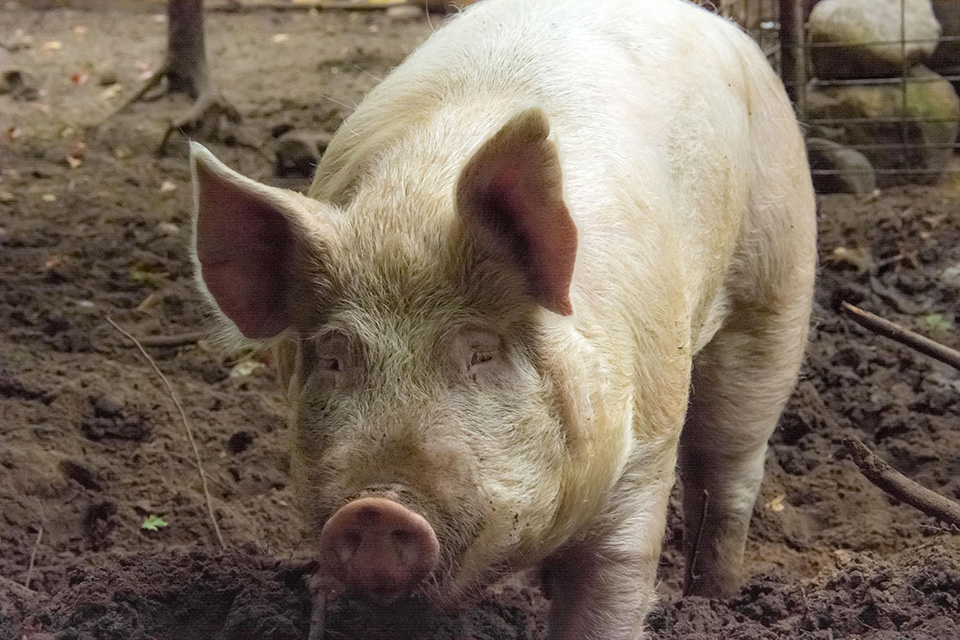 """State Question 777: What """"Right to Farm"""" really means"""