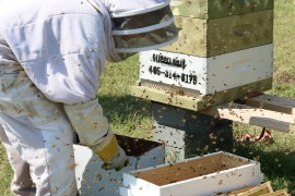 Bee Keeper Tonya Wells shifts bees from one hive to the next. Photo by Cici Simon