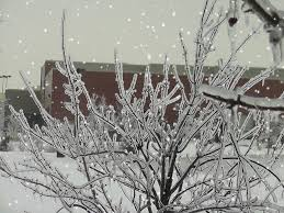 'Devastating' October ice storm damages campus, college closed at least until Friday.