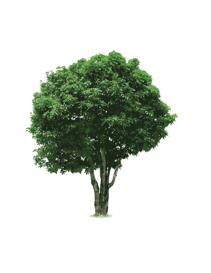 Learn, recycle, celebrate trees and get rewarded