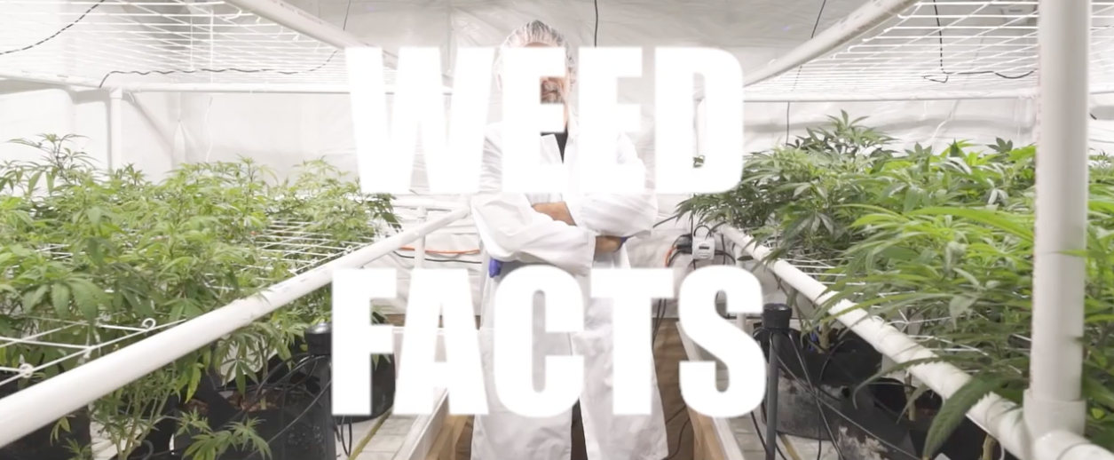 Weed Facts